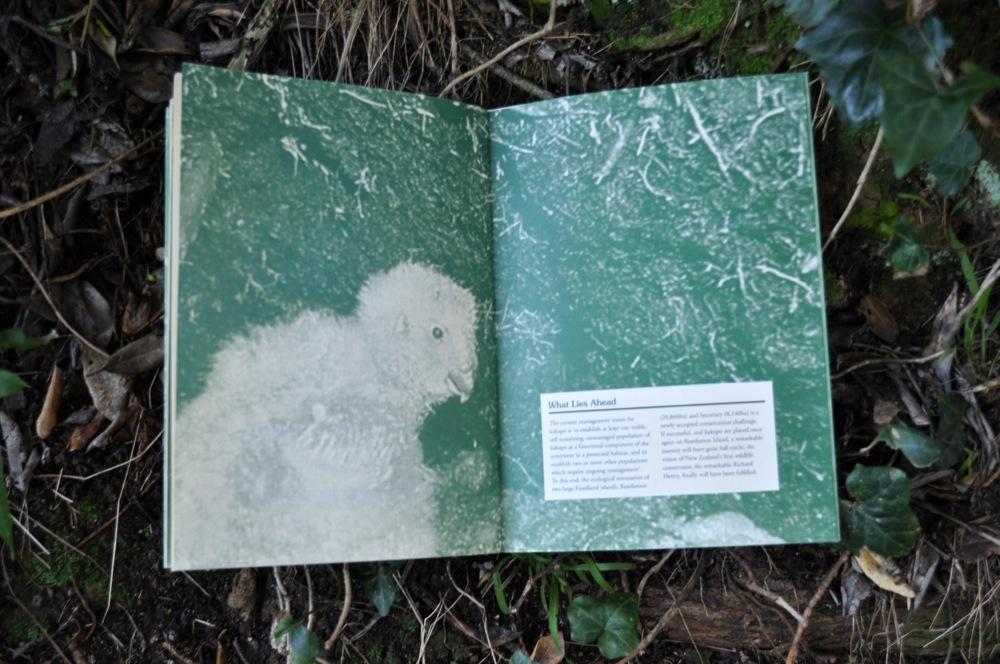 Kakapo: Strigops Habroptilus