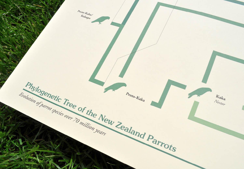 Kakapo: The Evolution Story